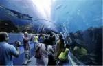 世界十大水族馆排名 上海海洋水族馆位列第三