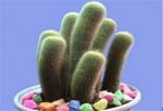 夜间释放氧气的植物有哪些 十大夜间释放氧气的植物排行