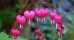 世界上最美丽的十朵花 玫瑰花不出意外排名第一
